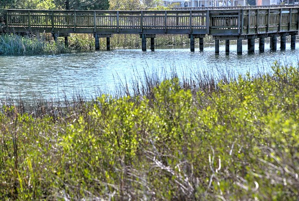 Heritage Shores Nature Preserve, North Myrtle Beach, March 21, 2017