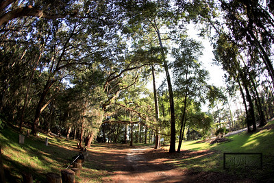 Road down to pier in May River Plantation, under canopy of live oaks.  © Copyright m2 Photography - Michael J. Mikkelson 2009. All Rights Reserved. Images can not be used without permission.