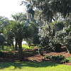 Formal Luce Gardens Looking Towards Cooper River