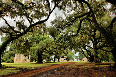 Row of live oaks with Spanish Moss leading to the Tabby Ruins on Spring Island, South Carolina  © Copyright m2 Photography - Michael J. Mikkelson 2009. All Rights Reserved. Images can not be used without permission.