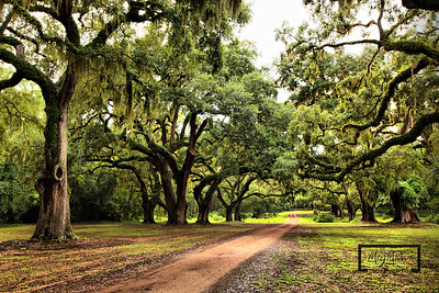 Road leading leading away from the Tabby Ruins under a canopy of Live Oaks on Spring Island.  © Copyright m2 Photography - Michael J. Mikkelson 2009. All Rights Reserved. Images can not be used without permission.  Spring Island, Tabby Ruins, South Carolina, HDR, Live Oak, Mike Mikkelson, m2 Photography, Old Tabby Links