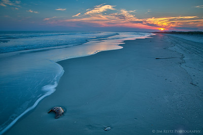 Horseshoe crab shell at sunset - Kiawah Island, South Carolina