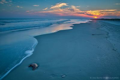 Horseshoe crab shell at sunset - Kiawah Island, South Carolina