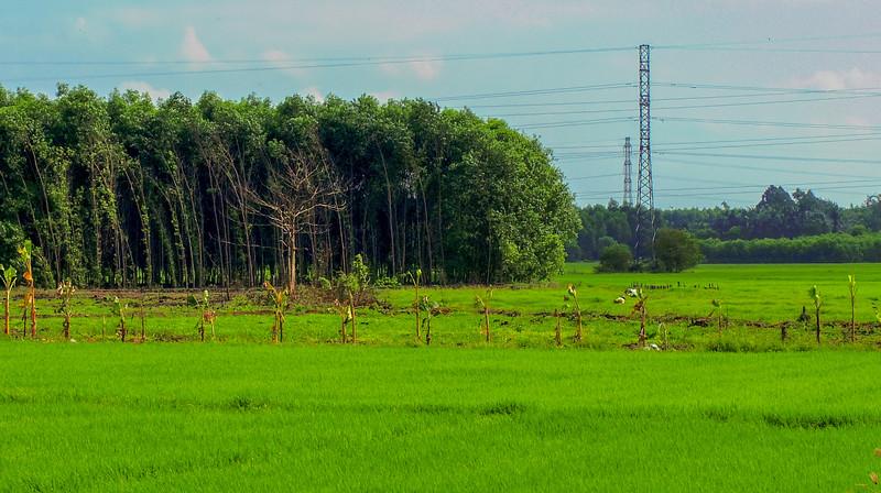 Rice Fields Vietnam