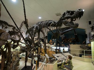 Stan the t-rex, Black Hills Institute, Hill City