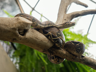 Some kind of snake, Reptile Gardens