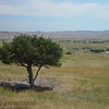 A tree in Badlands National Park.