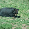 20160821 Bear Country USA-_06