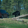 20160821 Bear Country USA-_07