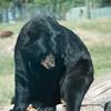 20160821 Bear Country USA-_09
