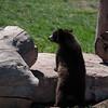 20160821 Bear Country USA-_16
