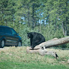 20160821 Bear Country USA-_08