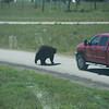 20160821 Bear Country USA-_05