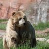 20160821 Bear Country USA-_12