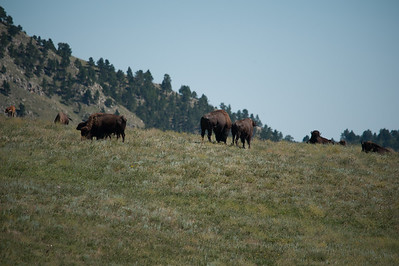 20160821_Custer State Park_02