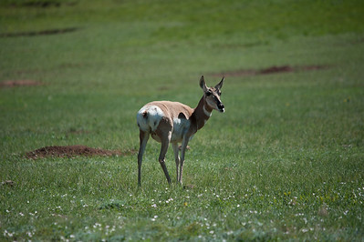 20160821_Custer State Park_03