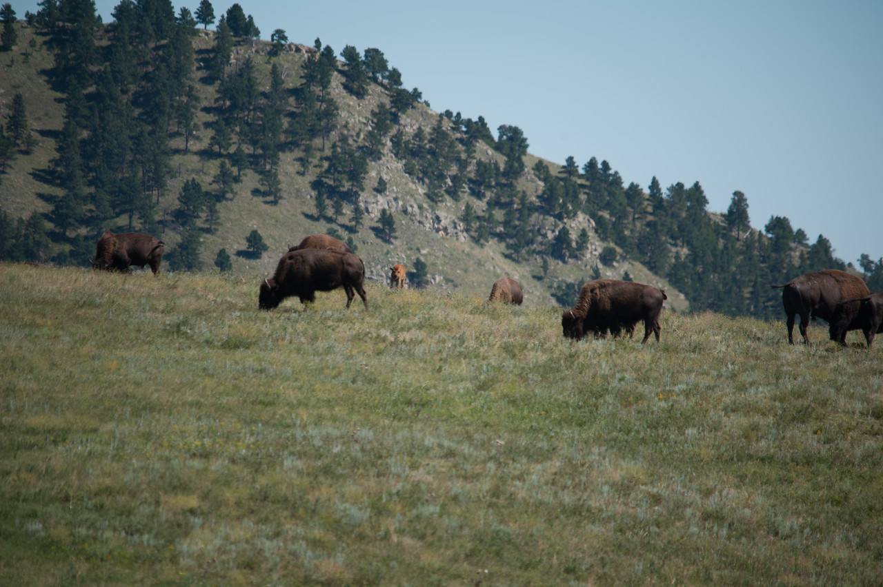 20160821_Custer State Park_01