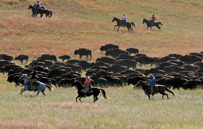 Buffalo Roundup 006
