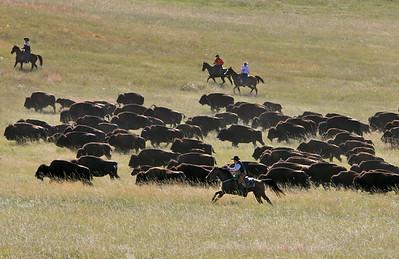 Buffalo Roundup 005