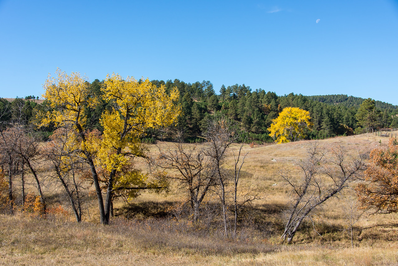 Moon over Custer State Park, South Dakota - October 2014