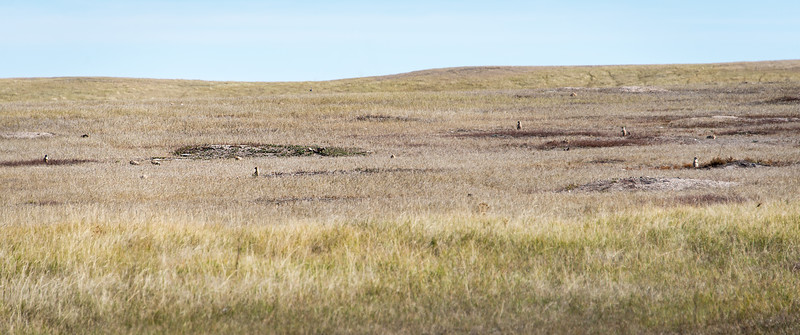 Prairie Dogs checking me out in Badlands National Park, South Dakota - October 2014