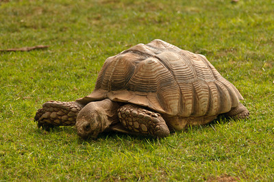 Tortoise at Reptile Gardens near Rapid City, SD