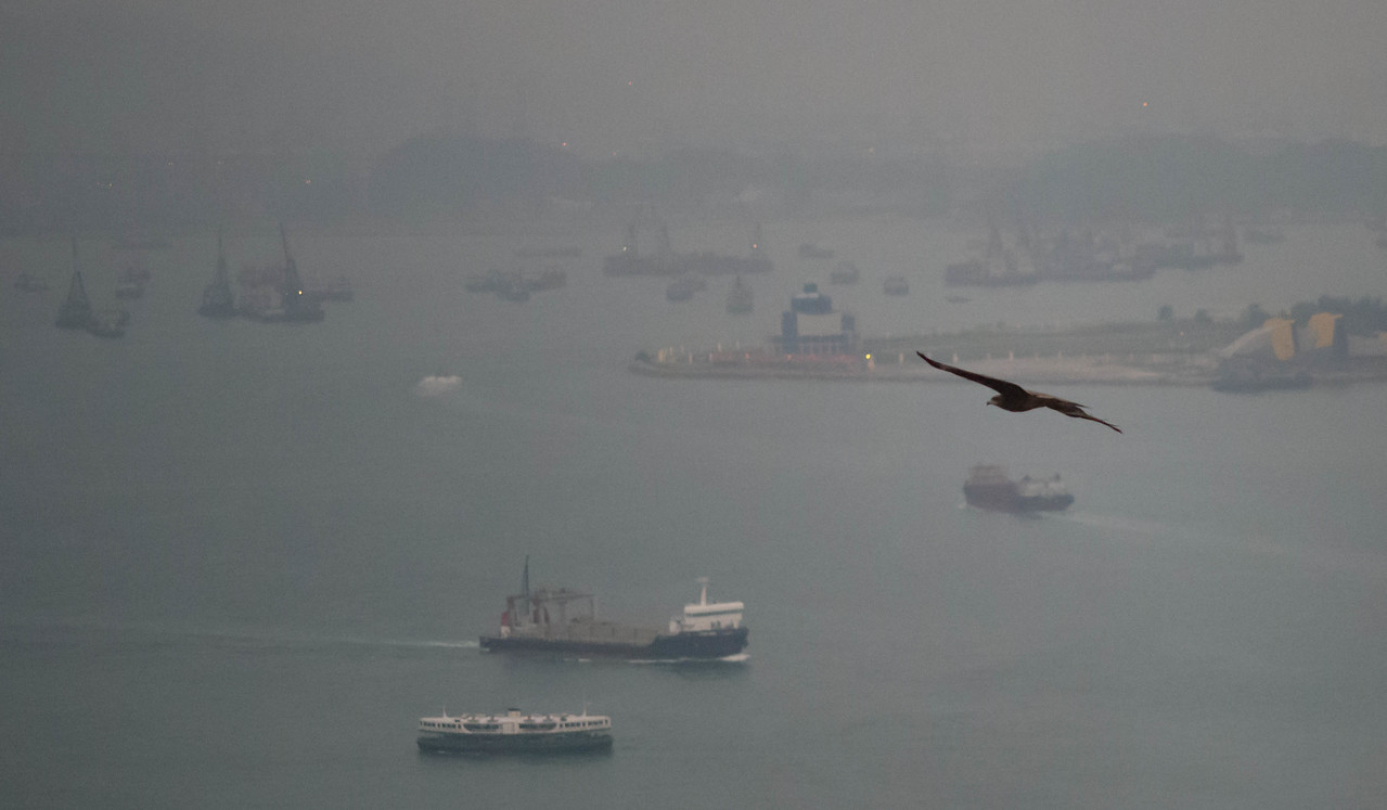 """This bird of prey is called a """"Kite"""", she is flying over Victoria Harbor.  This series of photos are taken from our Hotel room window."""