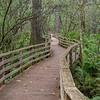 The boardwalk at Corkscrew Swamp.