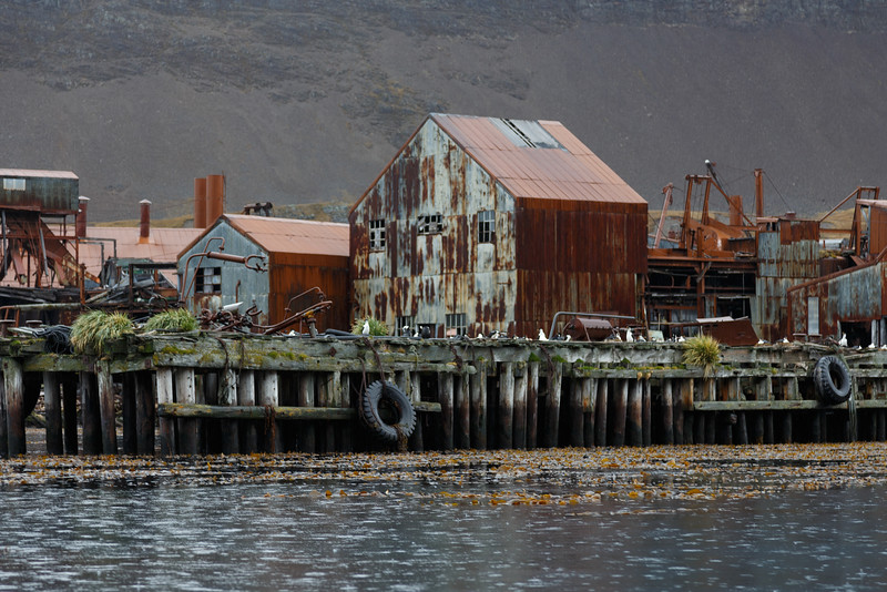 South Georgia Islands cruise with Fram South Georgia Travel