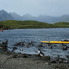 The fur seal pups loved the kayaks