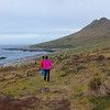 Walking down to the Black-browed albatross colony.
