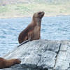 Sea lions on Seal Island