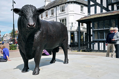 City centre Bull Sculpture, Hereford
