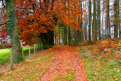 Woodland Ride, Late Autumn View, South Herefordshire