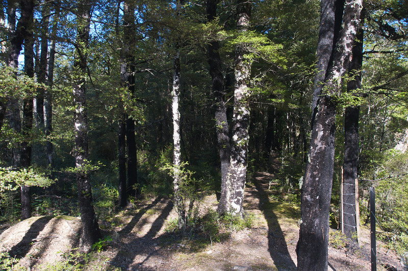 Sharplin Falls scenic reserve Mt Somers