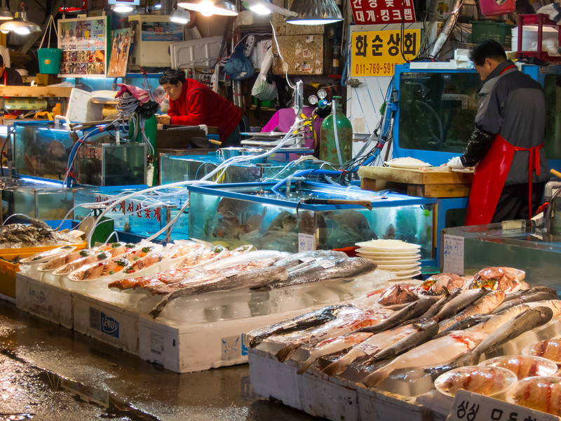 Waiting on customers at Noryangjin Fish Market in Seoul.