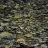 Raindrop River
