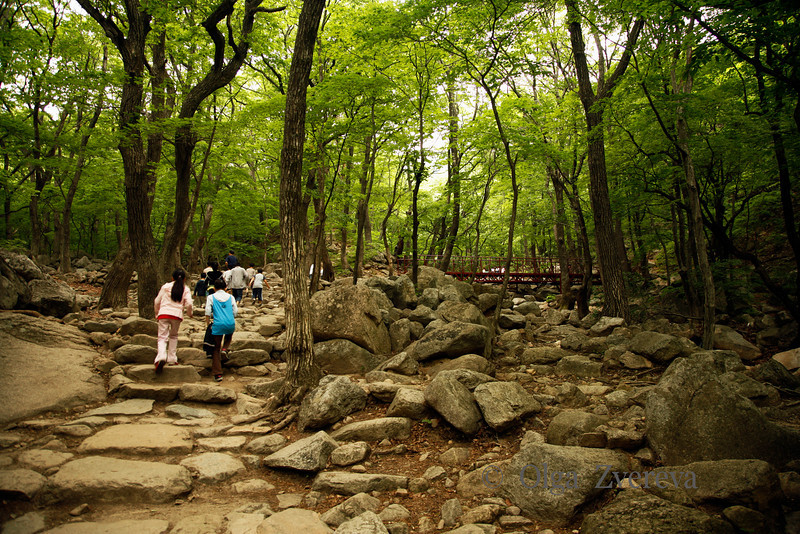 <p>Seoraksan National Park, South Korea</p>