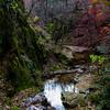 Autumn Ravine 2