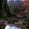 Autumn Ravine 4