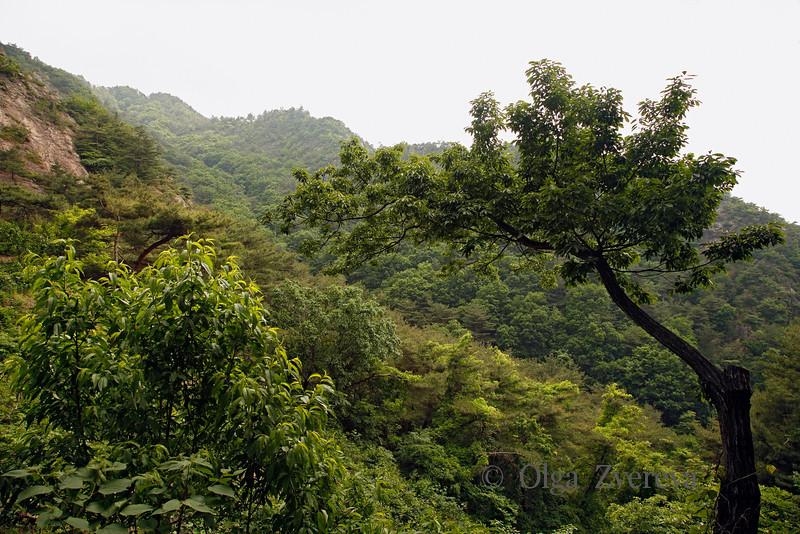 <p>Mt.Namsan Green Cover. Mt.Namsan area, Gyengju, South Korea</p>