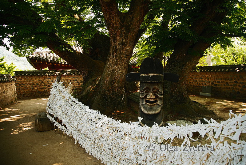 <p>Village's Sacred Space. Hahoe Folk Village, Andong, South Korea</p> <p>There villagers pray for wellbeing and where their ancestors first played the Hahoe maskdance. This Zelkova tree has already lived 600th years.</p>