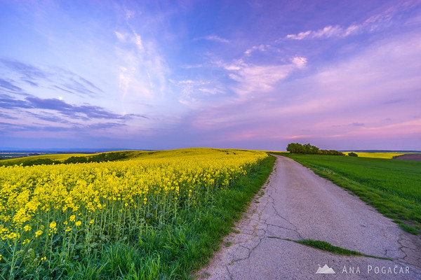 Fields of South Moravia at dusk
