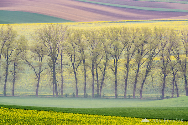 Cloudy morning in the rolling fields of South Moravia