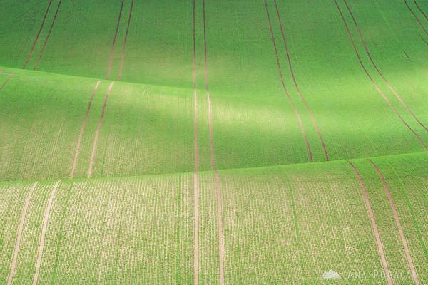 Carpet-like fields of South Moravia