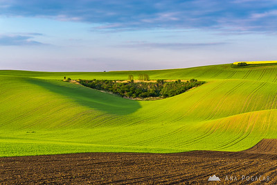 Fields of South Moravia in late afternoon light
