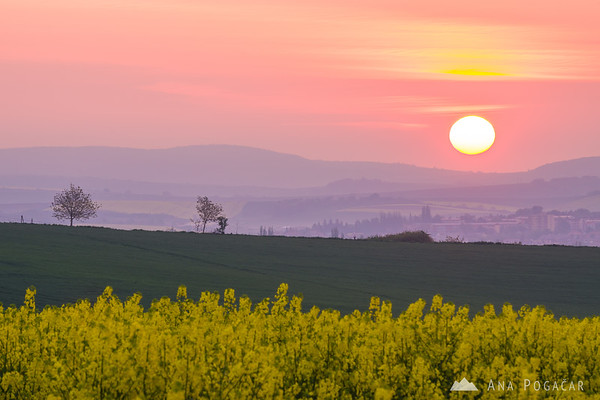 Rolling fields of South Moravia at sunrise