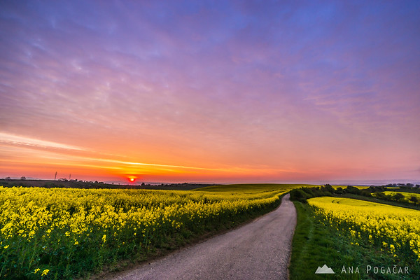 Rapeseed fields and an intense sunrise