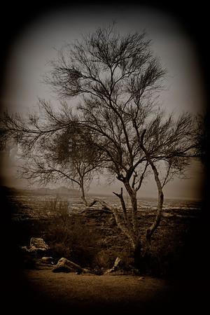 Tree & mtn 8600vig