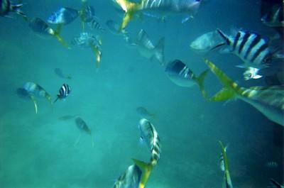 fish_5